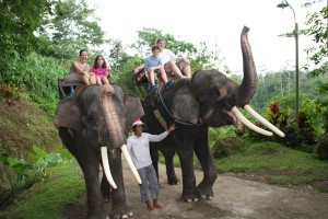 bali-ride-with-elephant-tour-bali-activities-tour-bali-car-rental-cheap