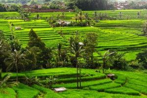 jatiluwih-rice-terrace-bali-overbight-tour-bali-car-rental-cheap