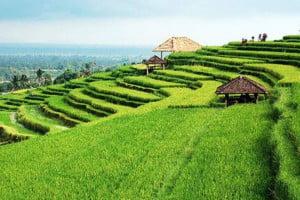 tabanan-rice-terrace-jatiluwih-bali-overbight-tour-bali-car-rental-cheap